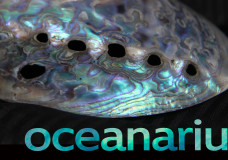 Oceanarium Video project